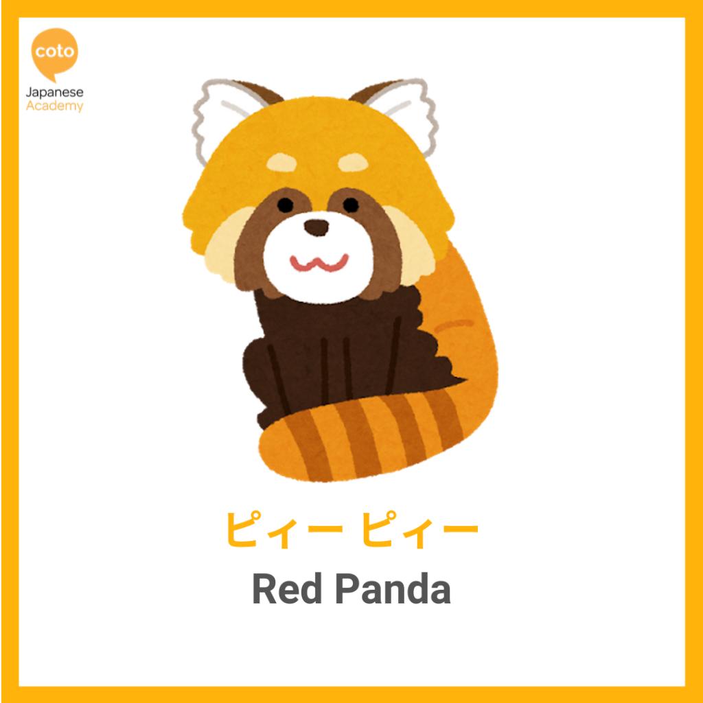 Common Animal Onomatopoeia used by the Japanese, red panda, image, picture, photo, illustration