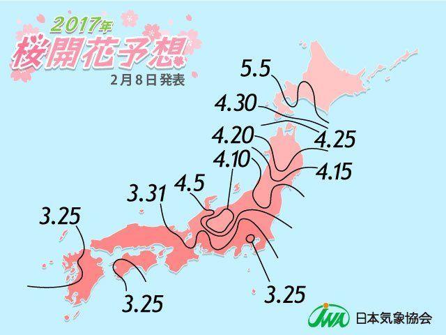 2017 Cherry Blossom Forecast!