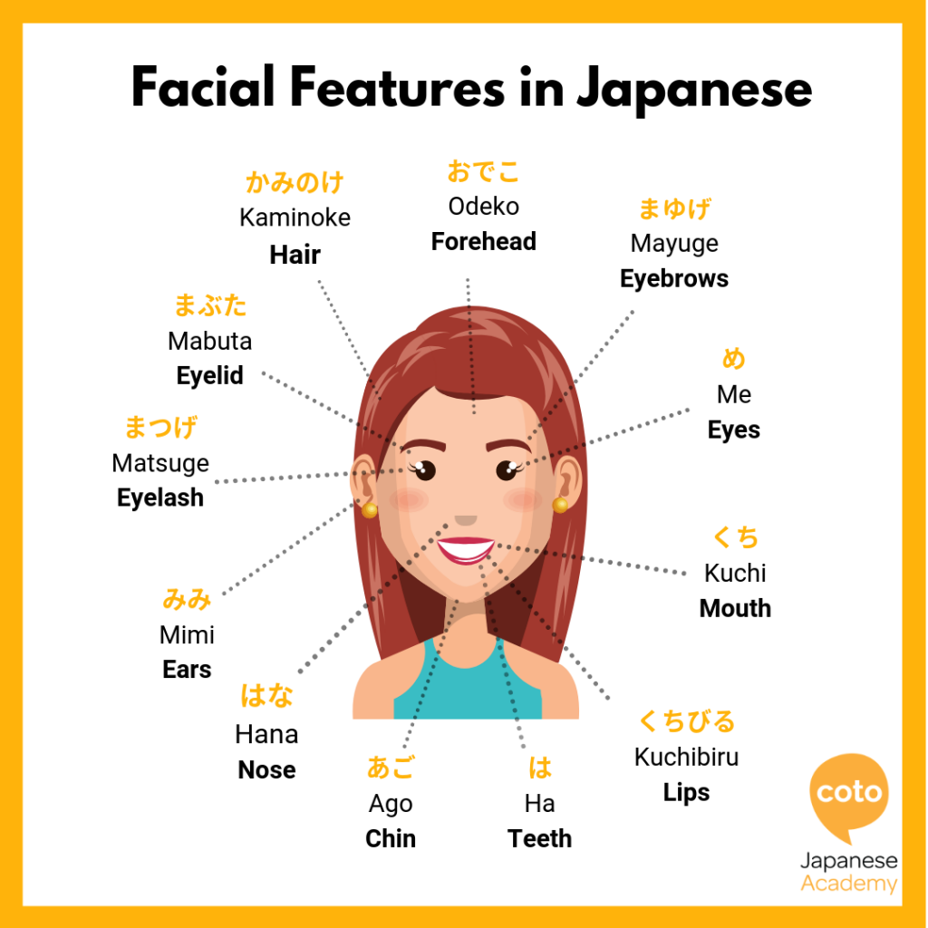 Facial Features in Japanese, image, picture, photo, illustration