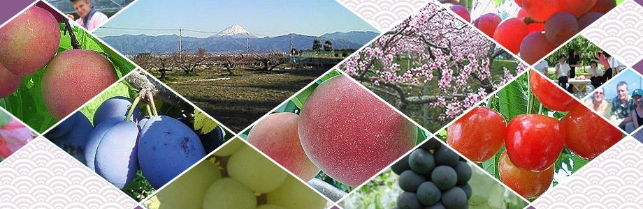 nakagomi orchard - fruit picking in tokyo